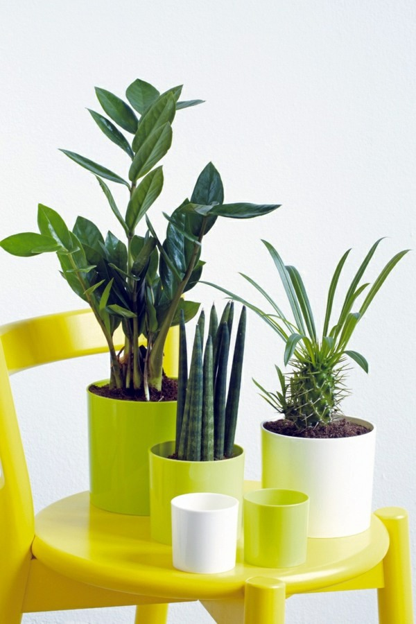 Plants for living room